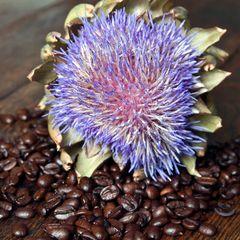 Fresh Coffee Beans & Blue Artichoke