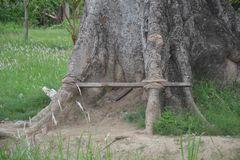 fressender Baum