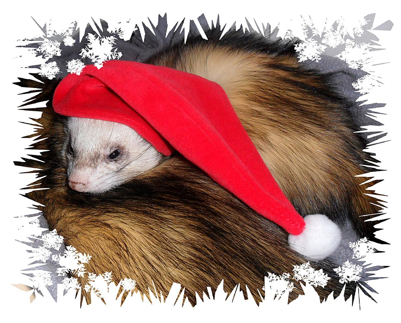 Frettchen-Weihnacht