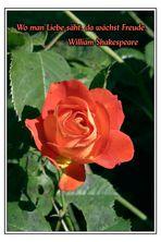 Freude ... (Rote Rose)