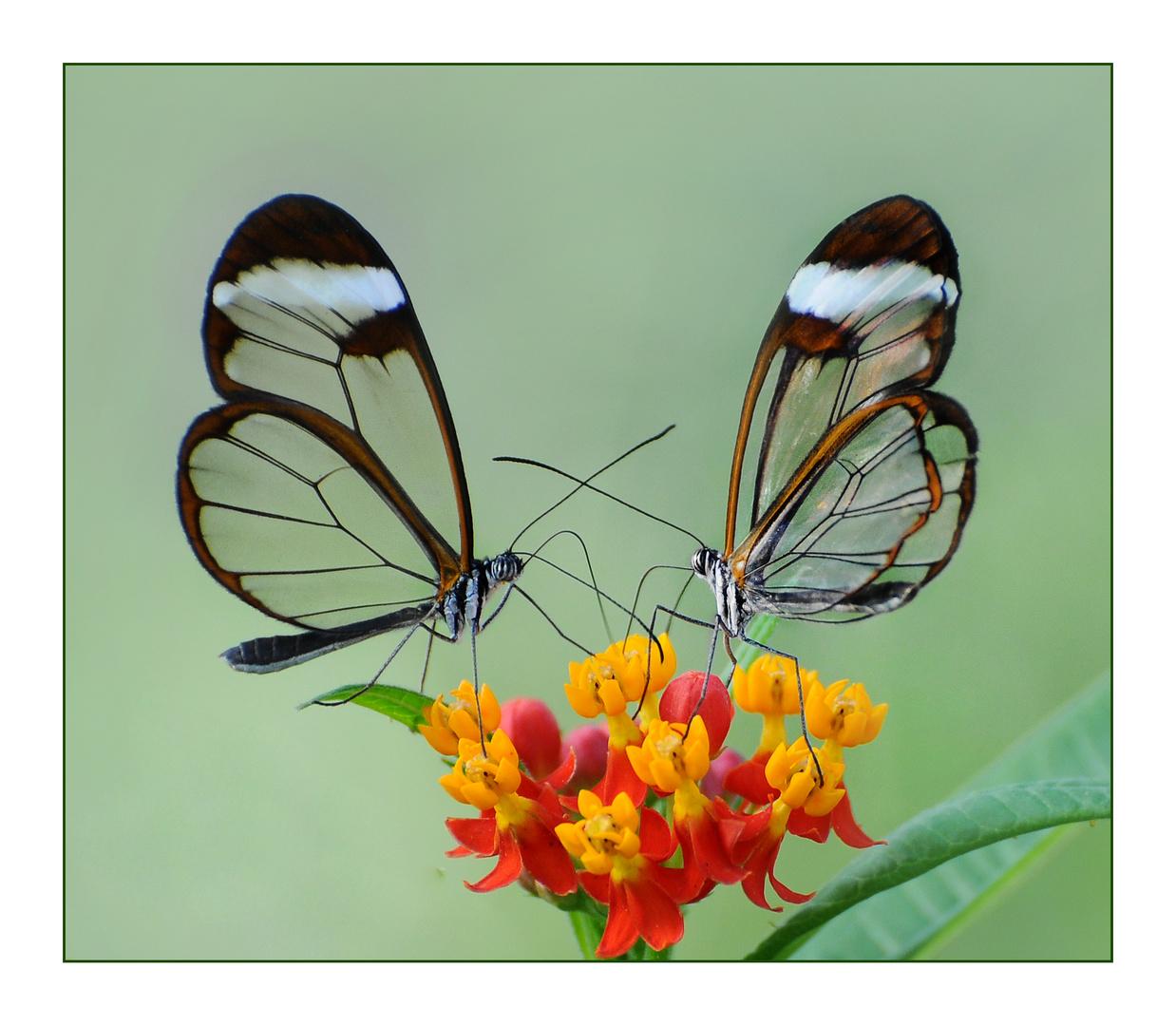 freund oder feind foto bild tiere zoo wildpark falknerei insekten spinnen bilder auf. Black Bedroom Furniture Sets. Home Design Ideas