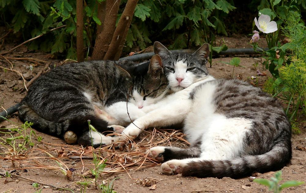 Freunde fürs Leben Mavi und Yaka