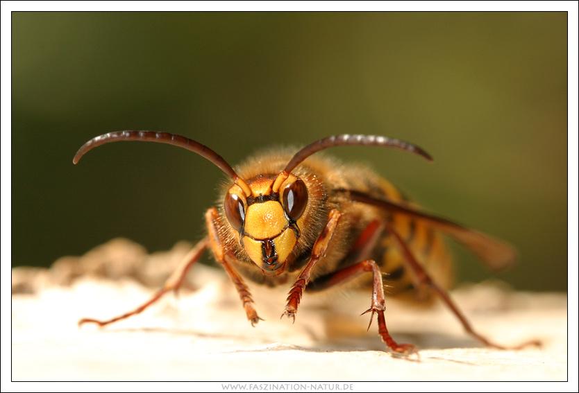 Freundliche Insekten ....