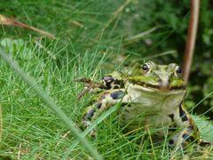 Freundlicher Frosch in Bremen