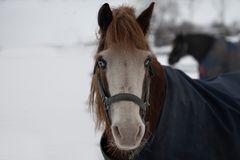 Freundliches Pferdchen