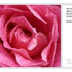 Freundschaft ... (Rosa Rose)