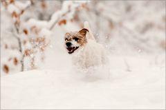 Frieda mag Schnee...