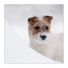 Frieda mag Schnee....II