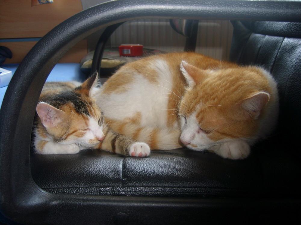 Frieda und Felix