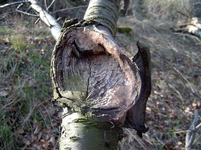 Friedhof der Bäume (1)