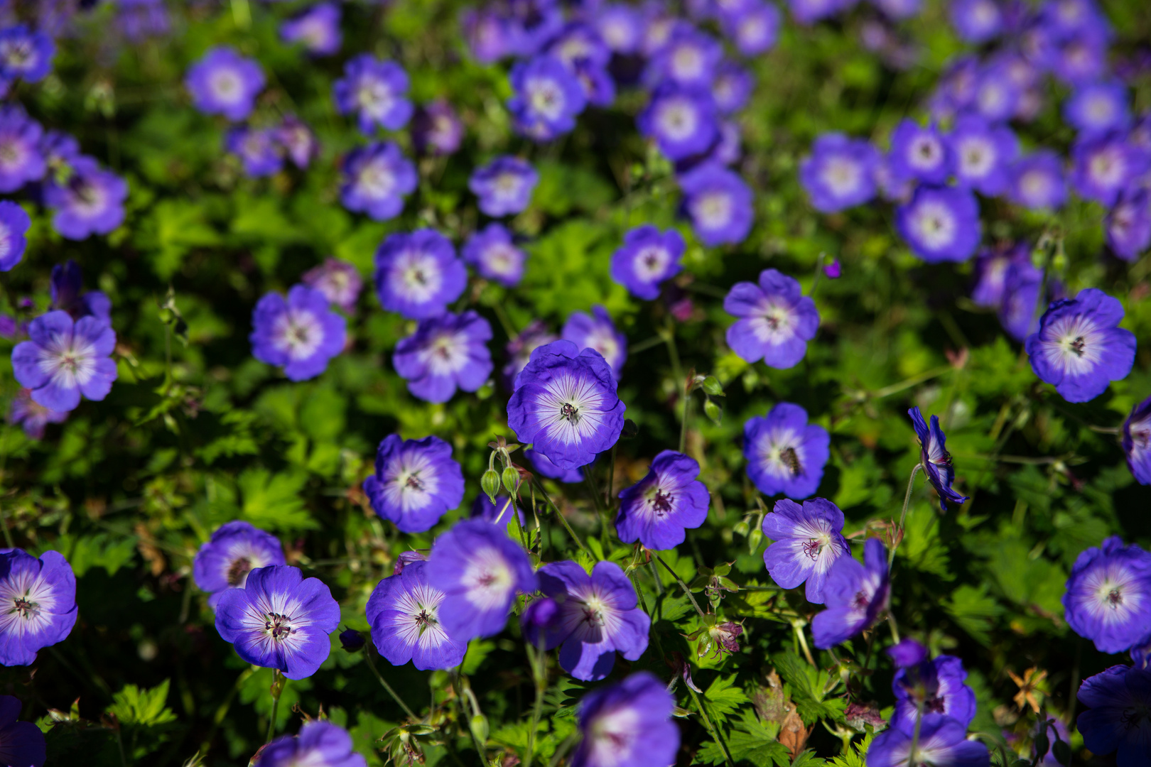 Friedhof voller Blumen
