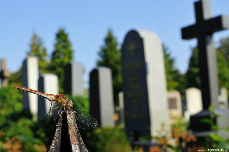 Friedhofsbesucher