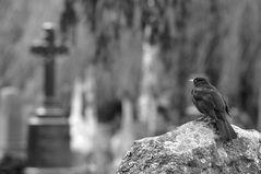 Friedhofsleben III