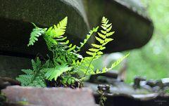 Friedliche Natur ...