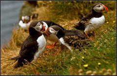 friedliche vögel