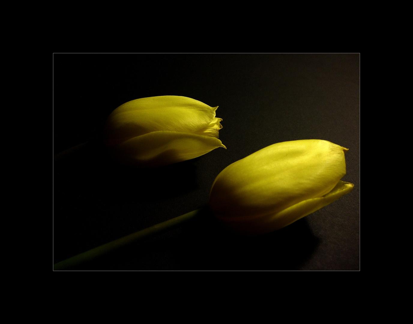 friedlicher Schlaf von 2 Tulpen