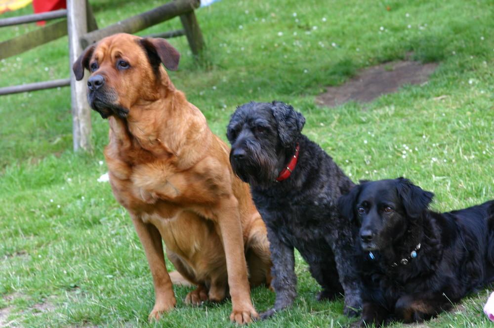 Friedo, Soda und Lucy (v. l.)