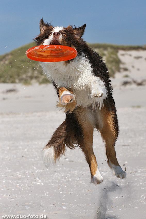 Frisbee-Fun