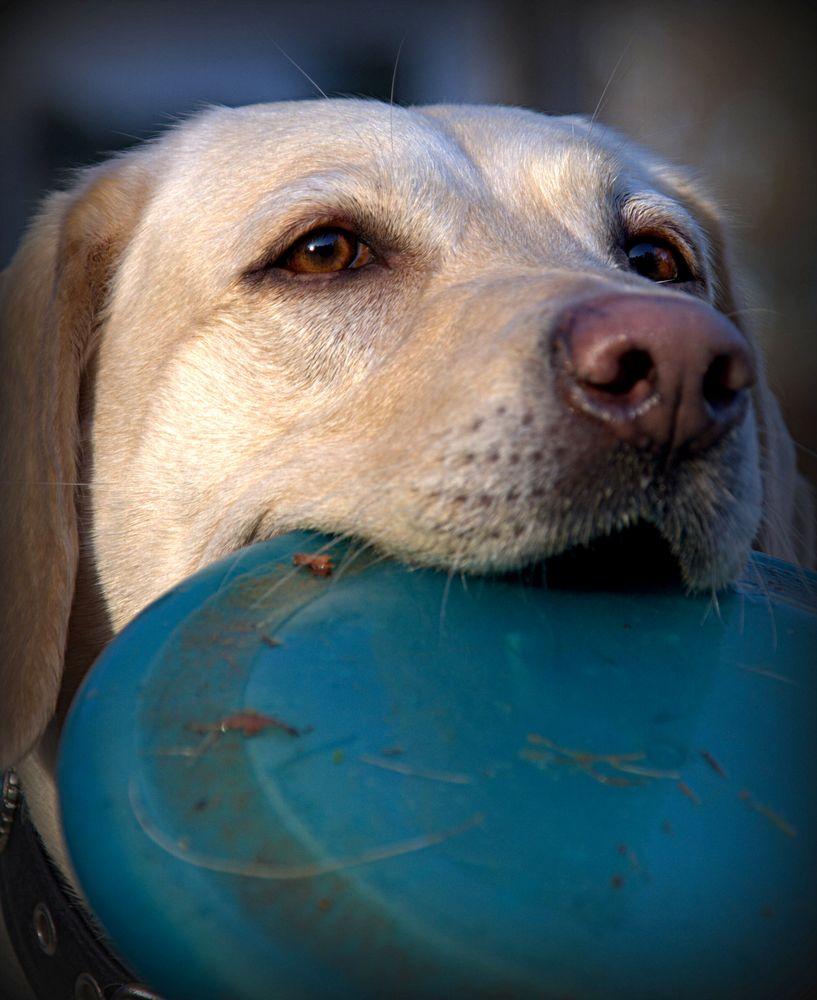 Frisbee- Spieler