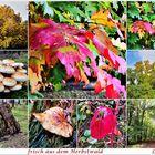 frisch aus dem Herbstwald