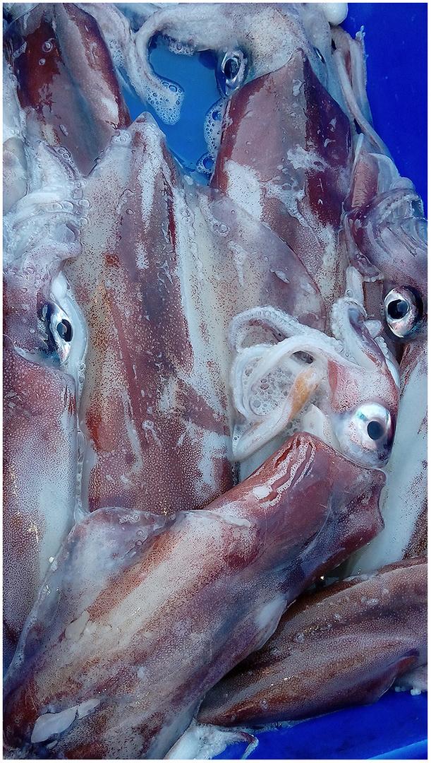 Frisch aus dem Meer