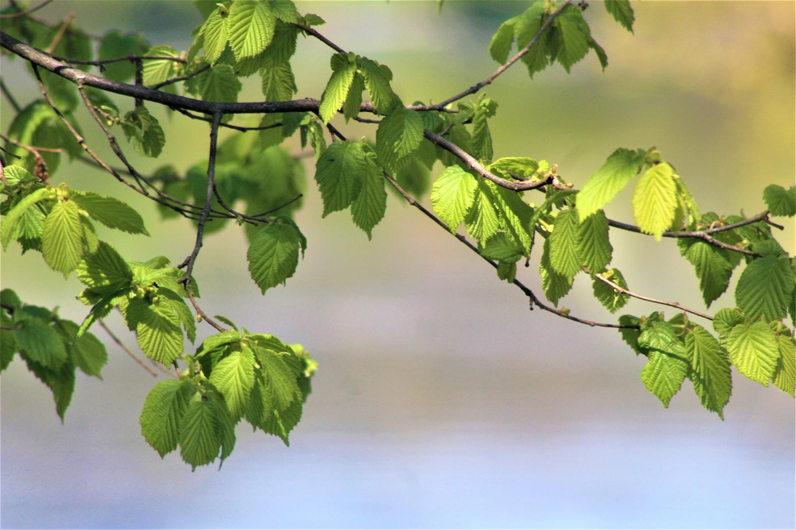 frisch ergrünt , unverkennbar der Frühling