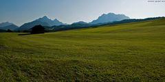 Frisch gemähte Alpenwiese