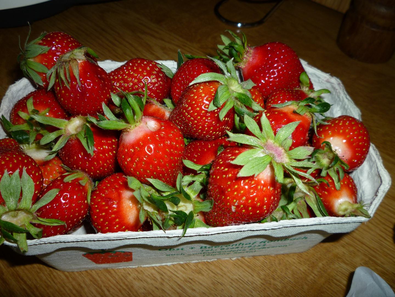 *** Frisch gepflügte Erdbeeren
