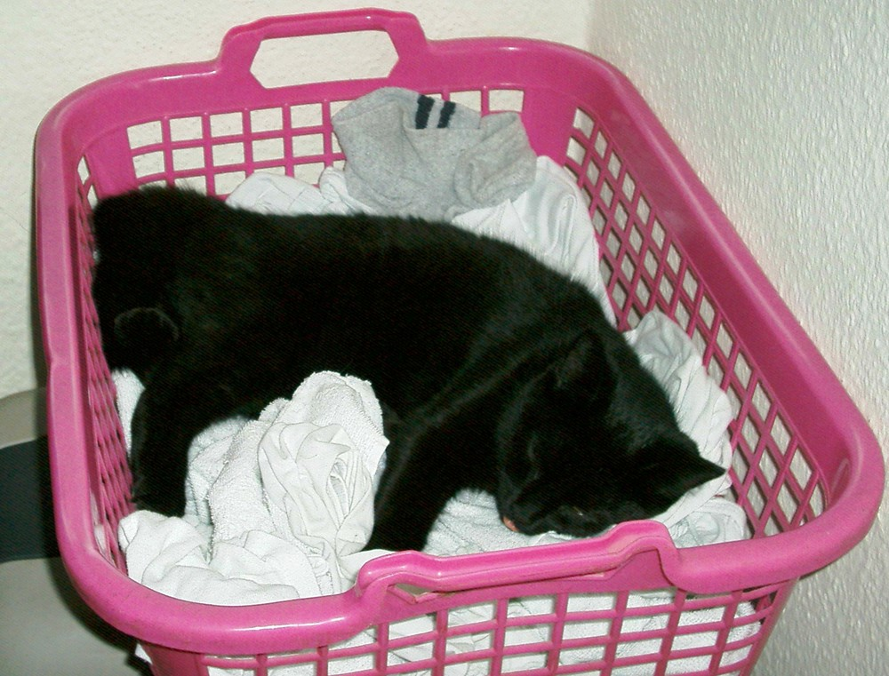 Frisch gewaschene weise Wäsche.....