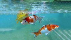 Frisch schwimmen  im Juni