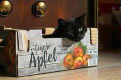 Frische Äpfel...