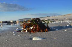 Frische Algen
