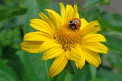 Frische Blüte