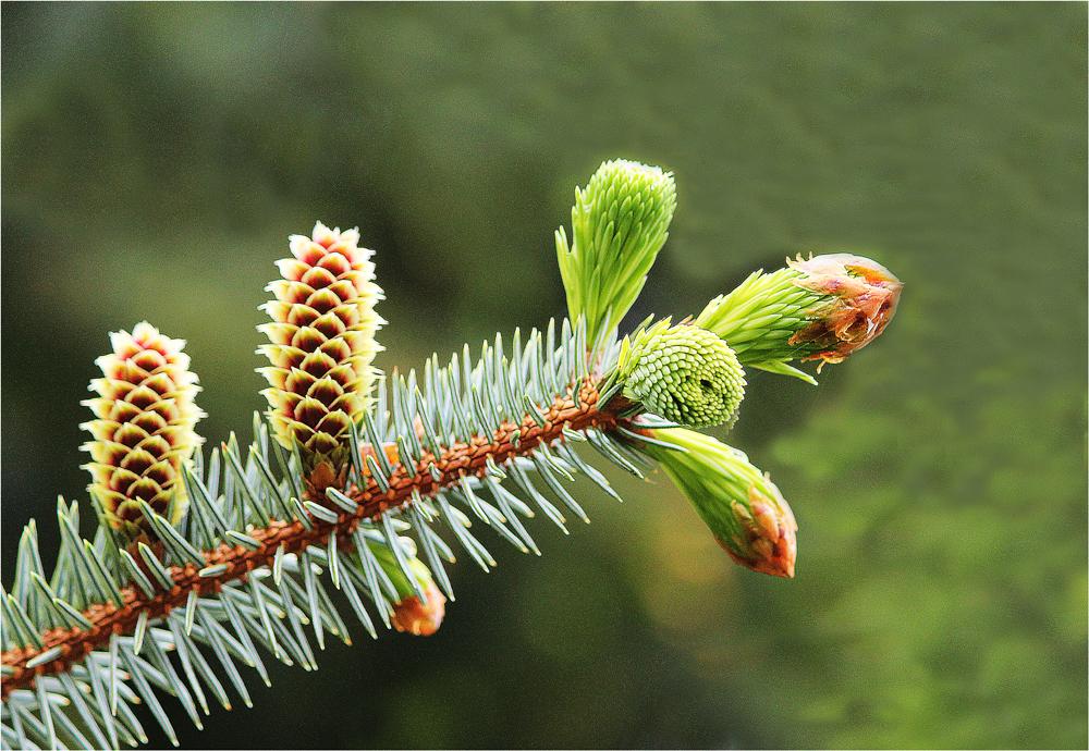 Triebe Pflanzen