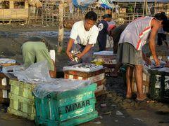 Frischer Fisch - vom Boot sofort zum Markt