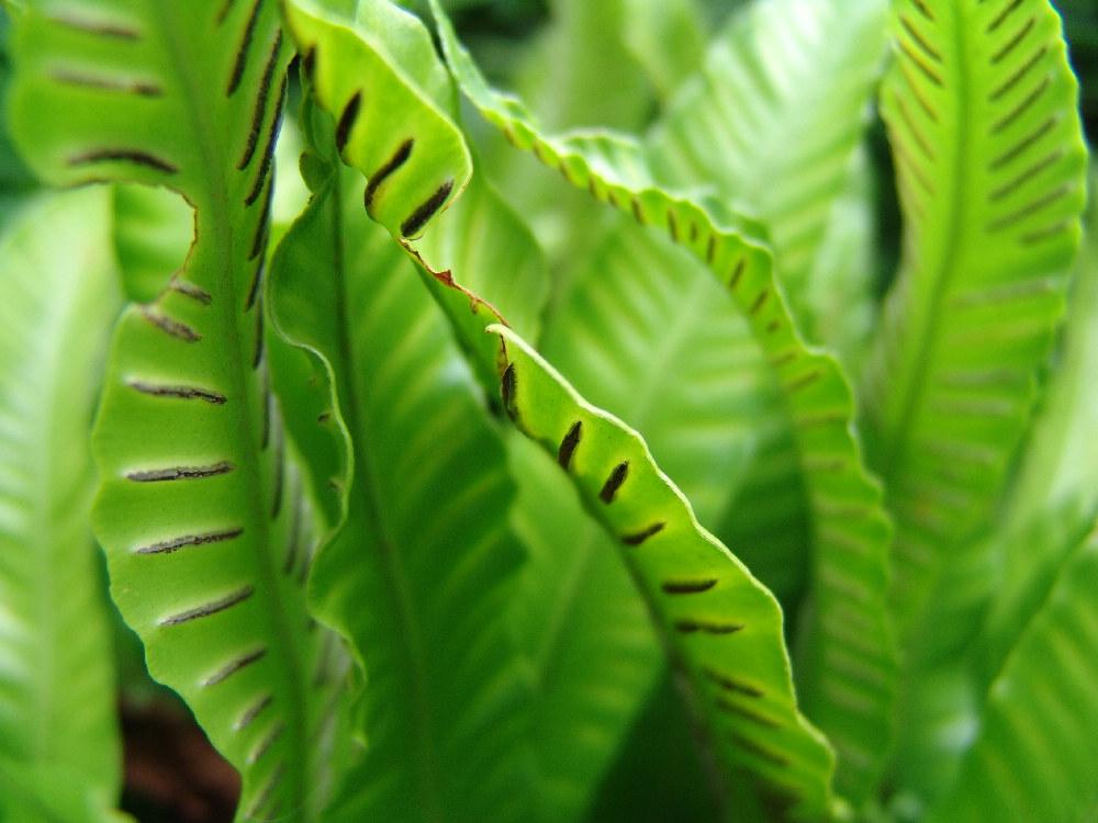 frisches Grün an einem grauen Tag