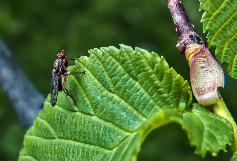 Frisches Grün mit Fliege