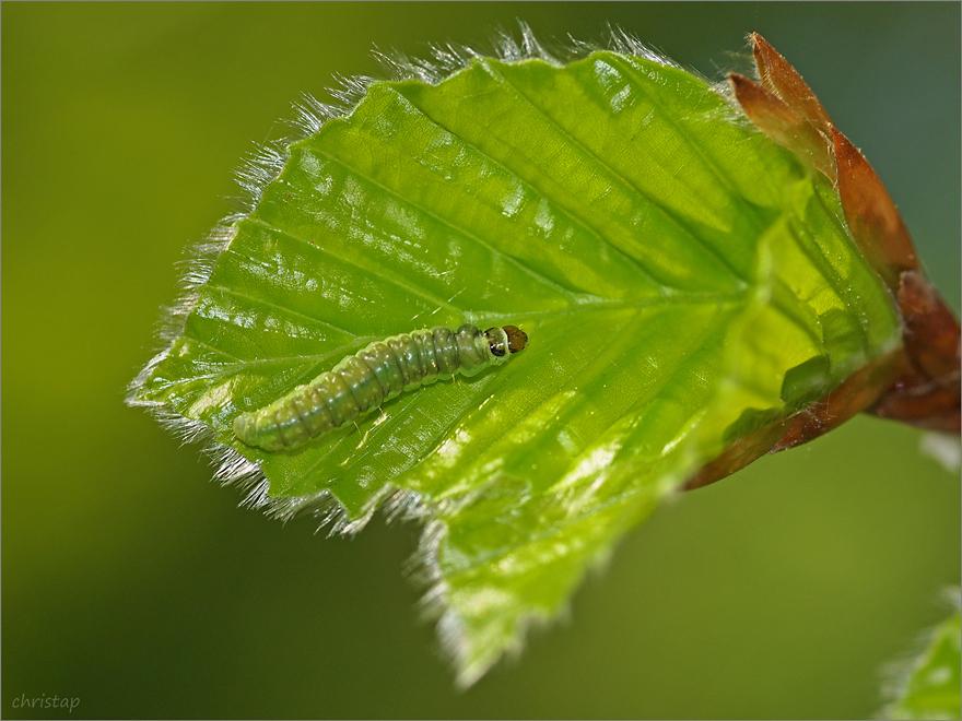 Frisches Grün überall