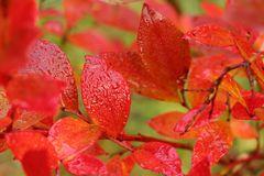 Frisches Rot