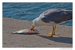 Frischfisch...