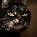 Frisierte Katze