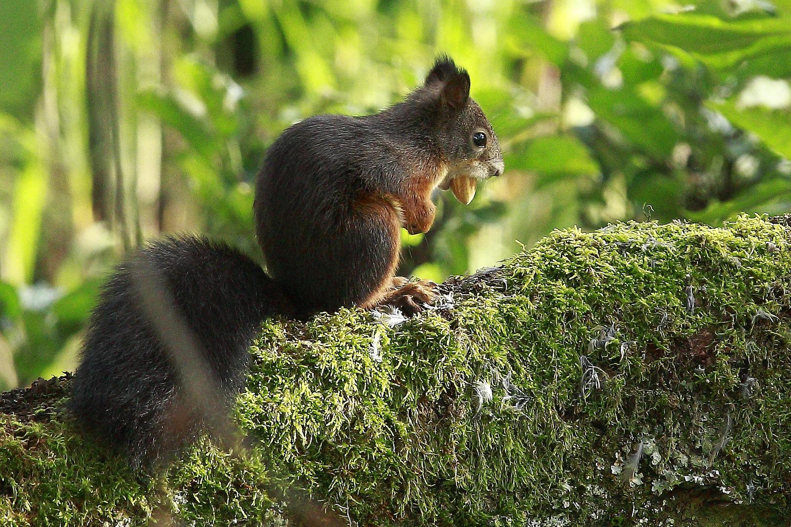 Fritz, das Eichhörnchen 6