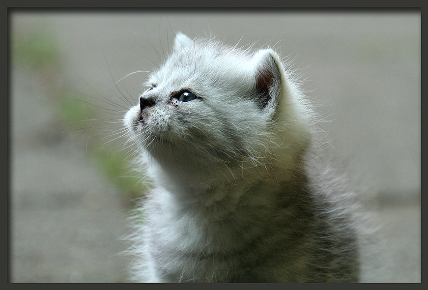 Fritz, der kleine Träumer