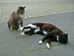 Fritz und Bonny,Mäusejäger.....