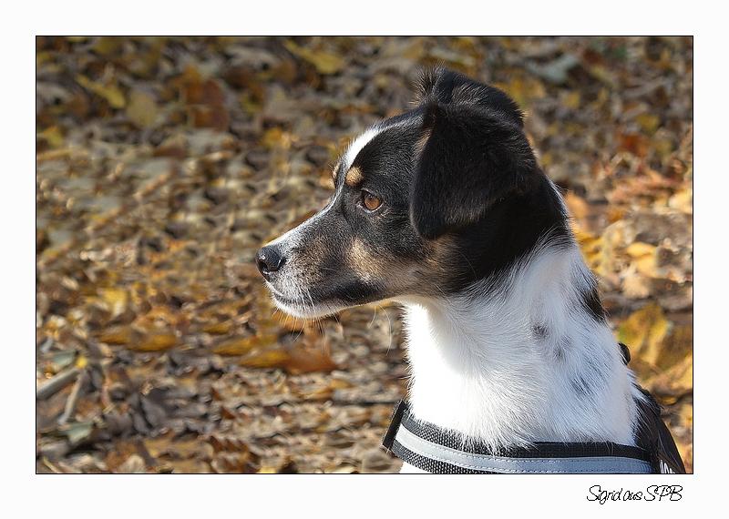 Fritzi ...auch er liebt Spaziergänge