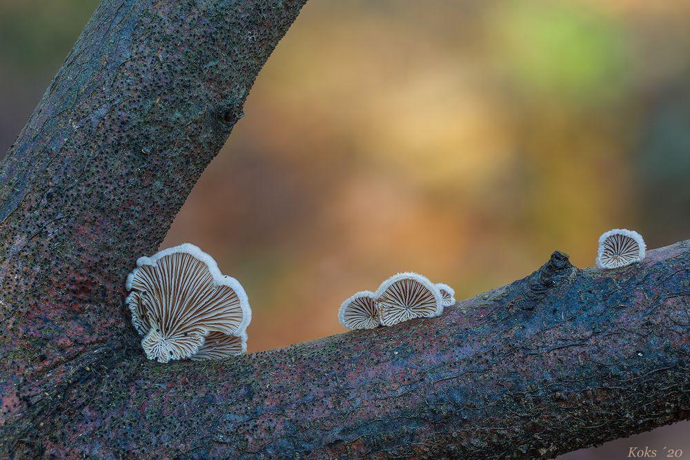 Frivoles im Wald