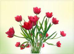 fröhlich beschwingter Tulpenstrauß zum Schalttag