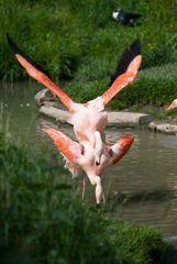 Fröhliche Flamingos