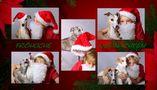 Fröhliche Weihnachten von Whippetfamilie