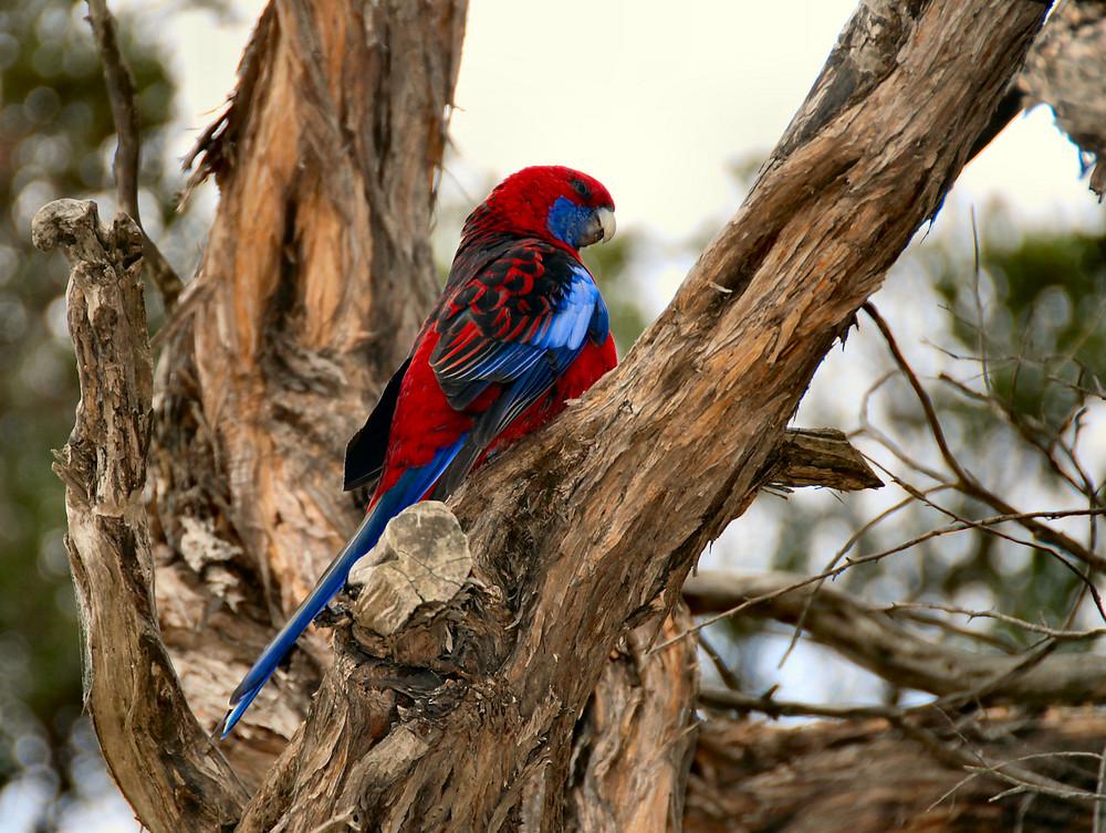 Fröhlicher Wecker Foto Bild Australia Oceania Australia